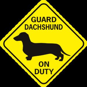 guard dachshund on duty