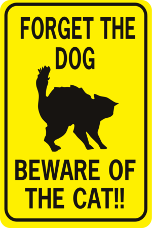 forget the dog beware of the cat rectangle