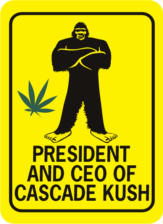 Bigfoot President and CEO of Cascade Kush Rectangle