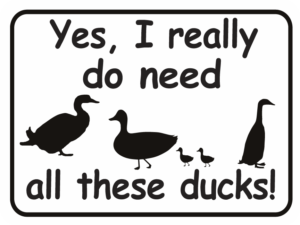 Duck Yes I really do need all these ducks