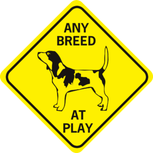 DOG BREED AT PLAY