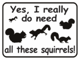 squirrel yes I really do need all these squirrels