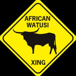 COW AFRICAN WATUSI