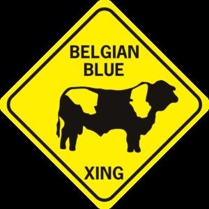 Cow Belgian Blue
