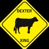 Cow Dexter