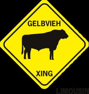 COW GELBVIEH