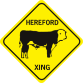 cow hereford
