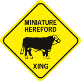 cow miniature hereford