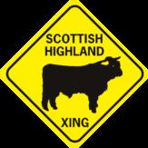 cow scottish highland