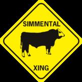 cow simmental