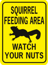 Squirrel feeding Area Watch Your Nuts