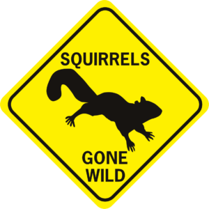 Squirrels Gone Wild diamond