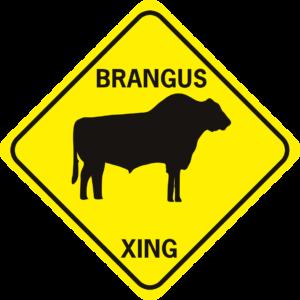 COW BRANGUS