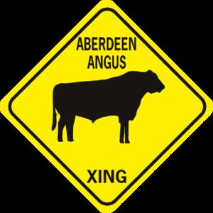 COW ABERDEEN ANGUS