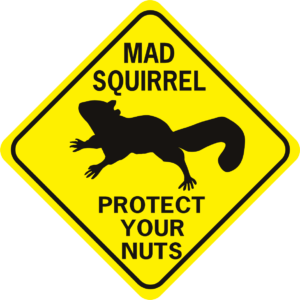 mad squirrel protect your nuts diamond