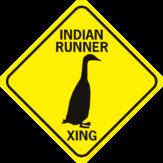 Duck Indian Runner Duck Xing