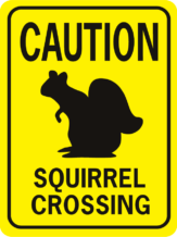 Caution Squirrel Crossing old image