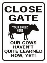 Cow Close Gate Our Cows Haven't quite learned how yet