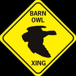 Barn Owl Xing flying