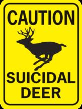 CAUTION SUICIDAL DEER