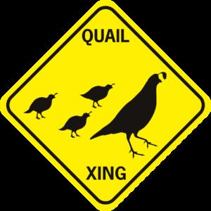 Quail Xing family