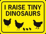chicken I Raise tiny dinosauers