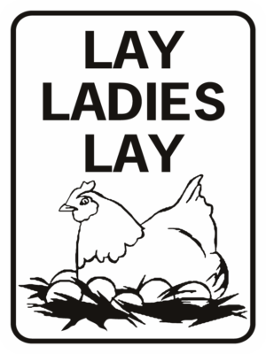 chicken Lay Ladies Lay