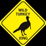 wild turkey xing